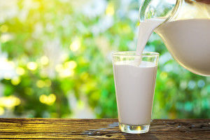 Молоко - основа сыра