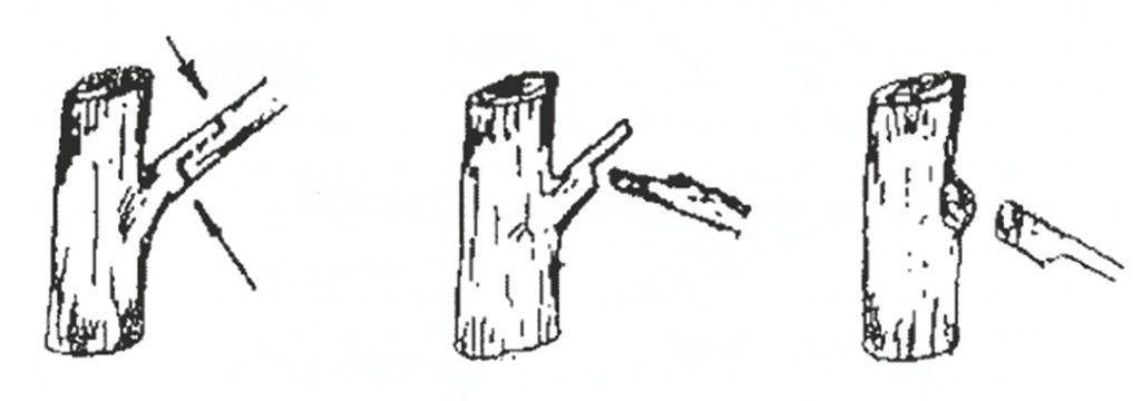 Технология обрезки веток