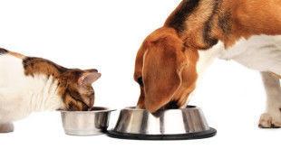 корм для кошек и собак