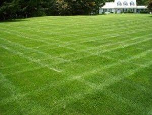 Мягкий, игровой газон должен иметь траву длинной от 4 см