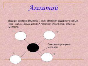 Аммоний