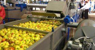 Переработка фруктов на мини заводе