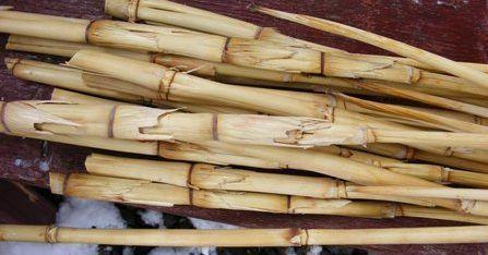 Стебли сарго используют для изготовления сахара
