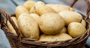 сырье для картофельных хлопьев