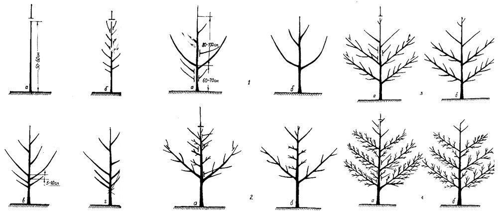 Существует множество типов обрезки дерева, в зависимости от его расположения