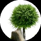 деревья иконка