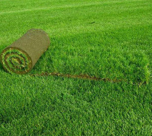 Интенсивность стрижки зависит от сорта травы