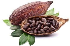 Какао бобы для шоколада