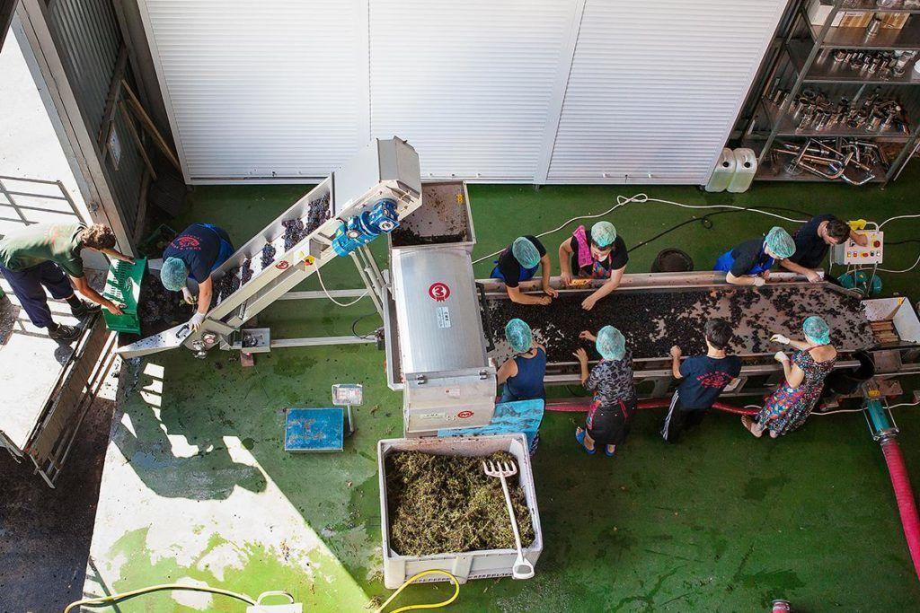 Процесс производства вина на мини лини